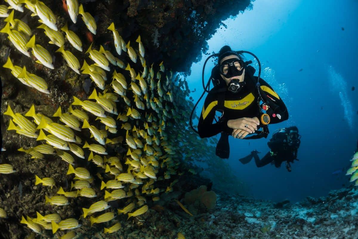 Diving Life Insurance