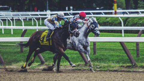 horse riding life insurance 1